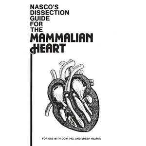Mammal Heart Dissection Guide