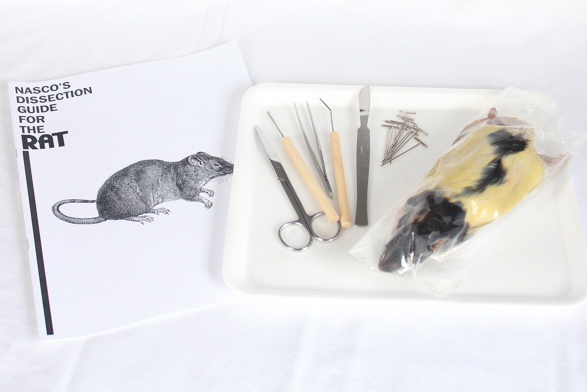 Rat Dissection Kit Home Educational Resources