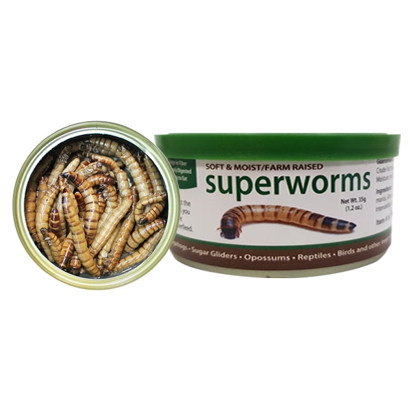 Canned Superworms