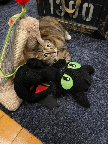 Gwen, a striped cat plays on the carpet with a handcrafted stuffed toy that is a black dragon with green eyes