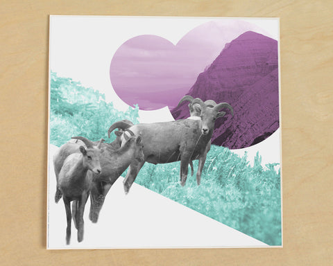 Bighorn Sheep Photo Collage Art Print