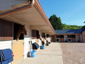 One day with Olympic Champion Kevin Staut in Normandy + 1 Hotel night + 1 CWD Bridle