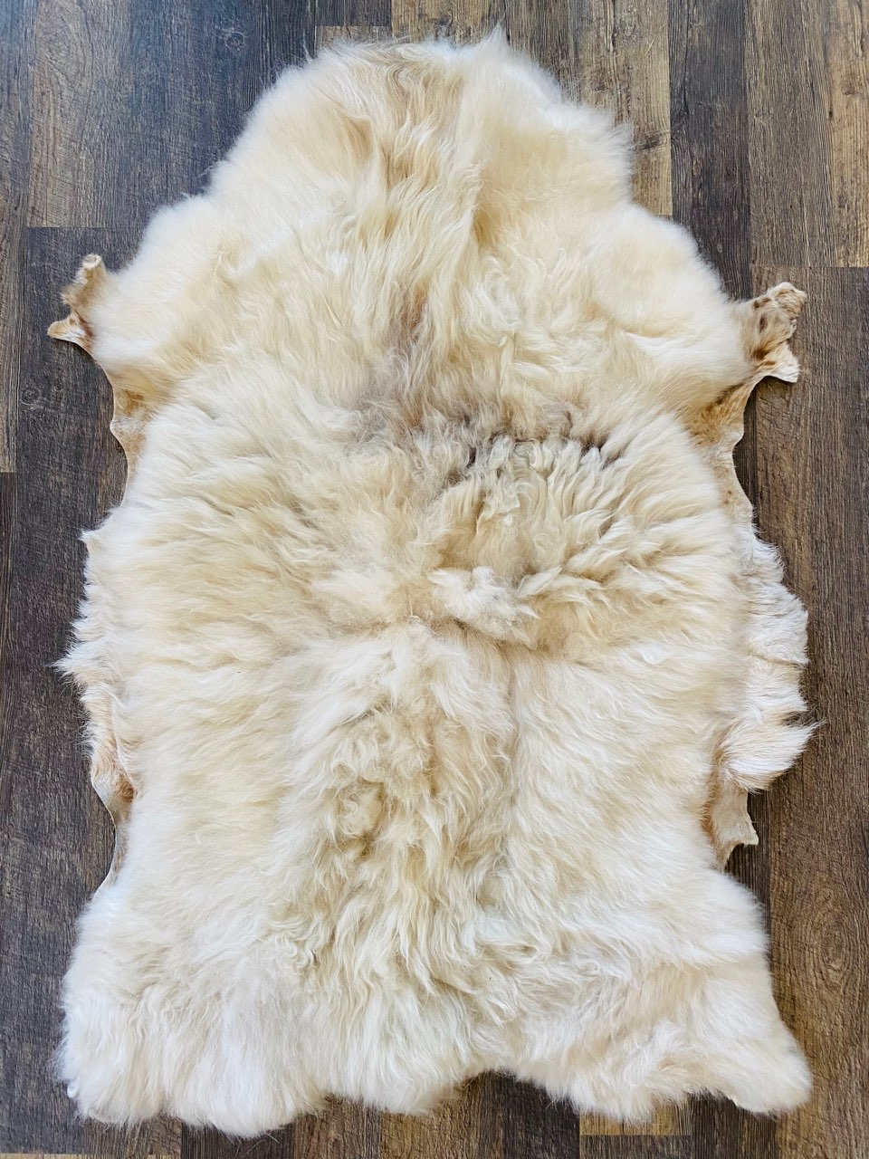 Sheep Pelt #1905