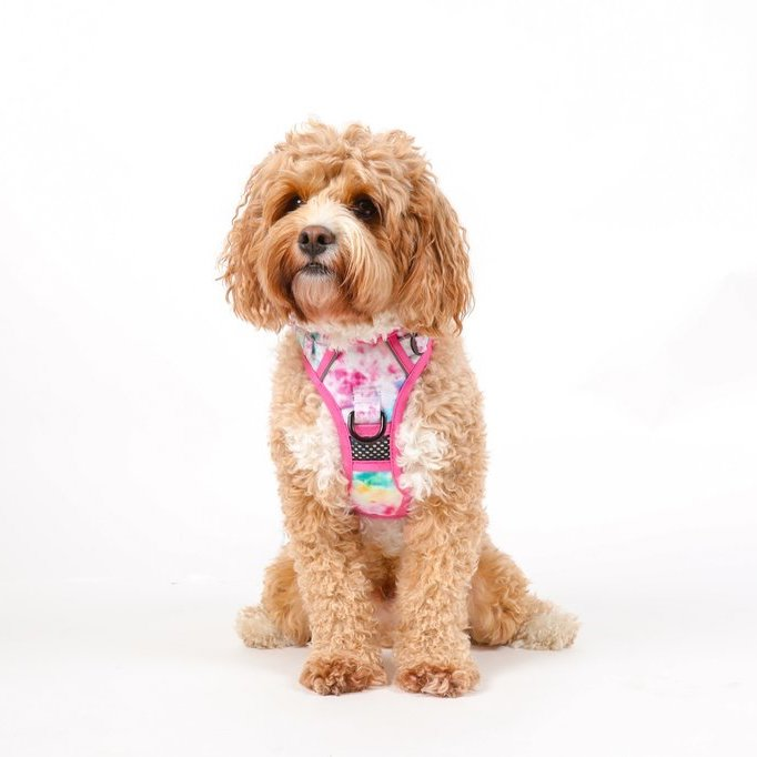 BIG & LITTLE DOGS - Cotton Candy All Rounder Dog Harness