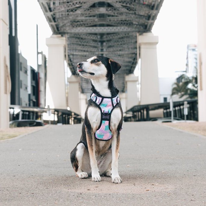 BIG & LITTLE DOGS - Pastel Dreams All Rounder Dog Harness