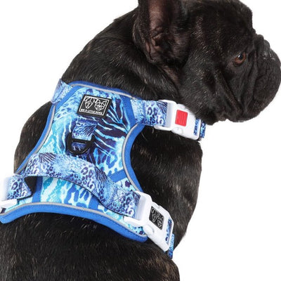 BIG & LITTLE DOGS - Snakeskin All Rounder Dog Harness