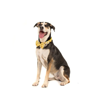 BIG & LITTLE DOGS - Bee-Hiving Dog Collar & Bow Tie