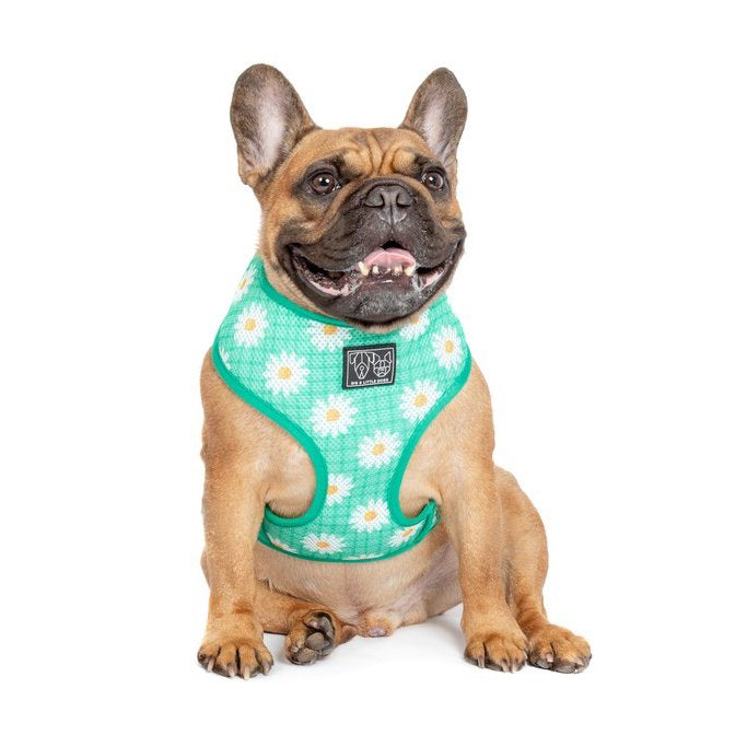 BIG & LITTLE DOGS - The Classic Print Harness: Fresh as a Daisy Dog Harness