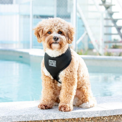 BIG & LITTLE DOGS - The Classic Harness: Black