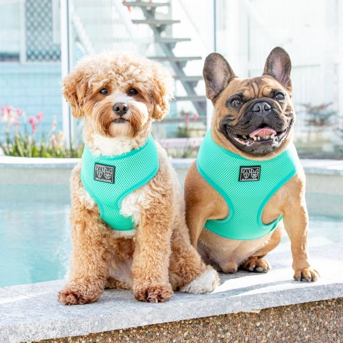 BIG & LITTLE DOGS - The Classic Harness: Teal Green