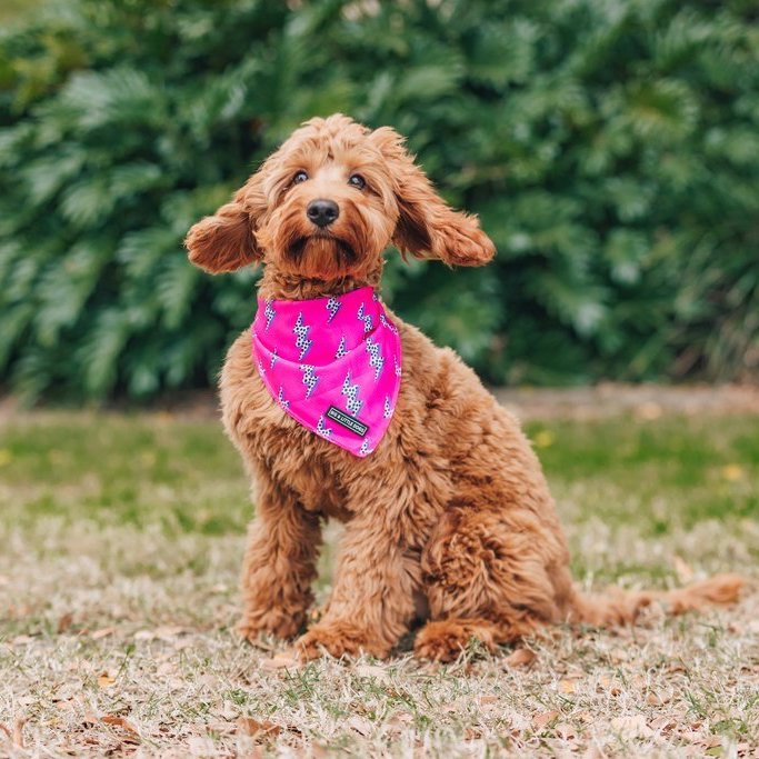 BIG & LITTLE DOGS - Pink Lightning Dog Bandana