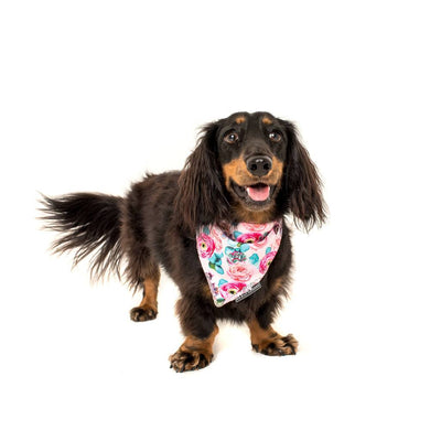 BIG & LITTLE DOGS - I'm a Succa for You Dog Bandana