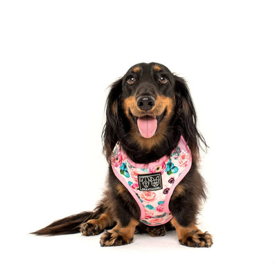 BIG & LITTLE DOGS - I'm a Succa for You Adjustable Dog Harness