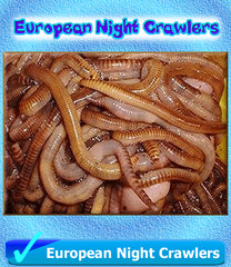European Night Crawlers