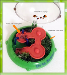 Insect Playground sold by Insect Sales.com