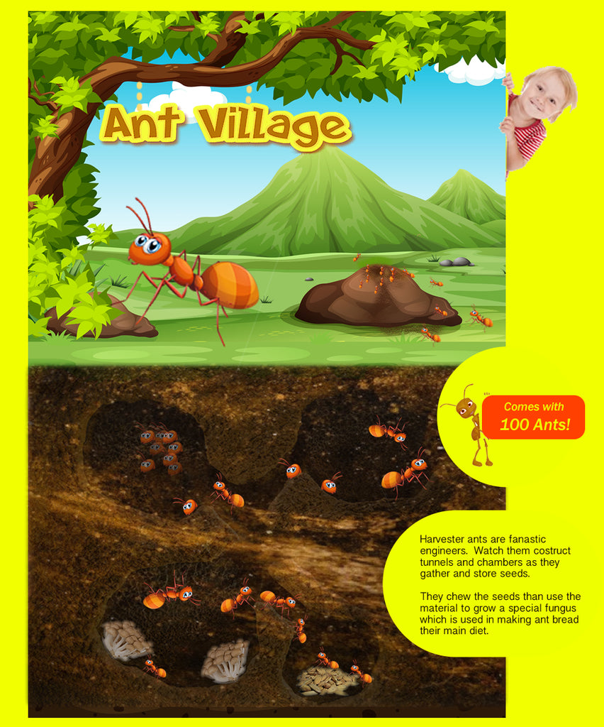 Ant Village by Insect Sales.com