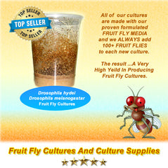 Fruit flies and culture supplies