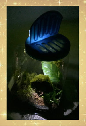 Lite-Up Praying Mantis Clear Plastic Ventilated Habitat - Convenient Handle