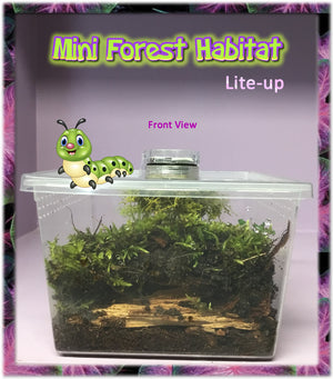Lite-Up Mini-Forest Habitat with: Aged Bark-Forest - Floor Moss - Coconut Fiber