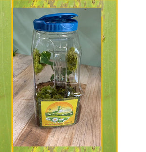 Praying Mantis Clear Plastic Ventilated Habitat -Convenient Handle Design