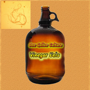 Vinegar Eels *ONE GALLON*- Live Food For Tiny Fish Fry, Invertibrates and Corals