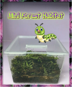 Mini-Forest Habitat With Aged Bark + Forest Floor Moss + Coconut Fiber