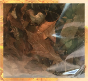 Red Oak Hand Picked Steamed & Dried Leaves For Terrarium-Vivarium-Insect Habitat