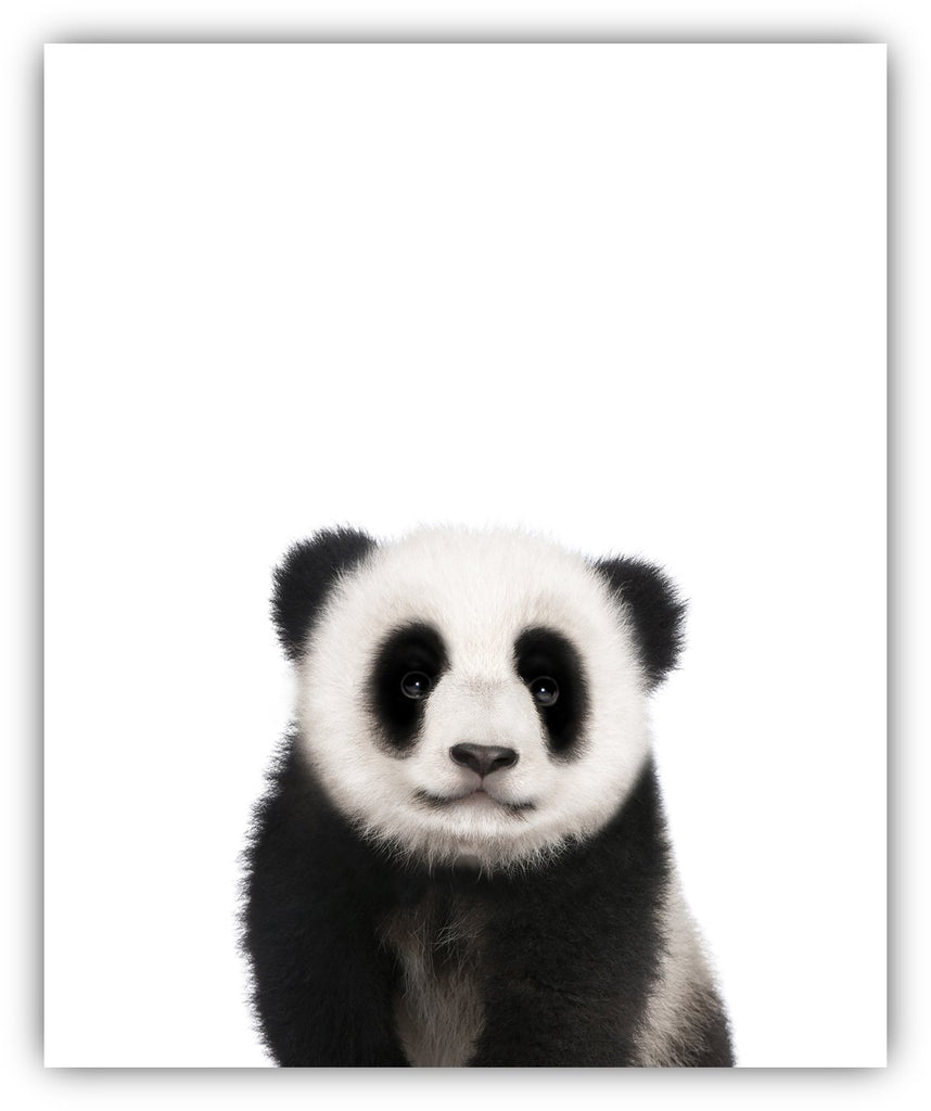 Baby Animals Nursery Wall Decor Photography Wall Prints - UNFRAMED (8x10)