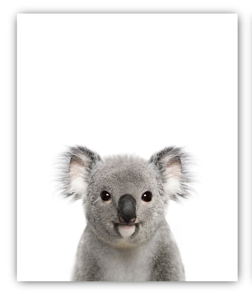 Baby Animals Nursery Wall Decor Photography Wall Prints