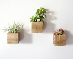 Set of 3 Magnetic Wooden Planters