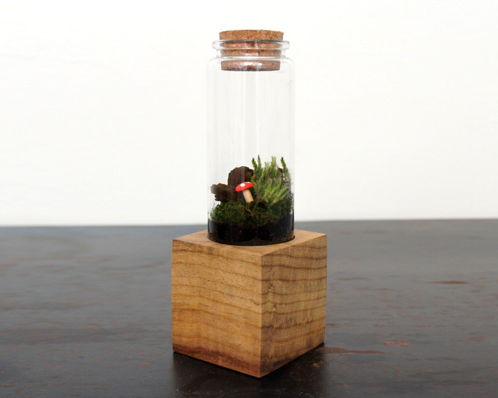 Moss + Twig Terrarium Kit with Wood Base