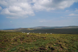 Dartmoor on August 11th 2020