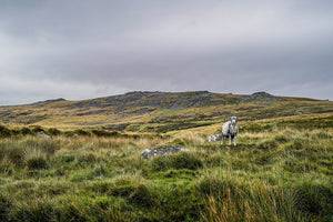 Dartmoor on August 28th 2020