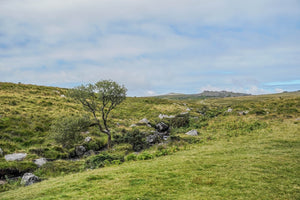 Dartmoor on August 4th 2020
