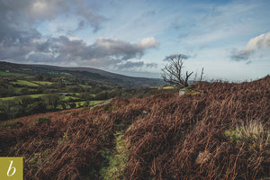 Dartmoor on December 15th 2020