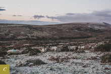Load image into Gallery viewer, Dartmoor on December 31st 2020