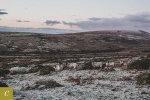 Dartmoor on December 31st 2020