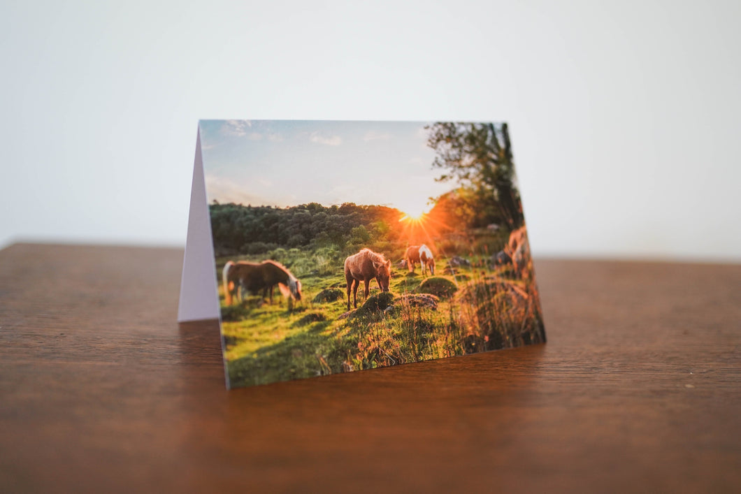 Grazing Ponies Card