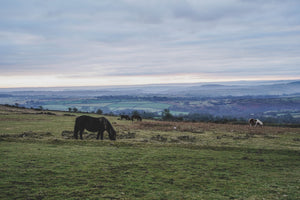 Dartmoor on January 10th 2021