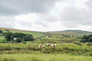 Dartmoor on July 10th 2020