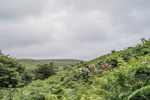 Dartmoor on July 2nd 2020