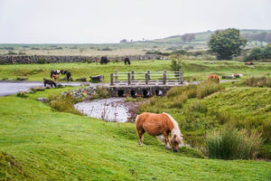 Dartmoor on July 24th 2020