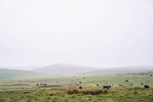 Dartmoor on June 18th 2020