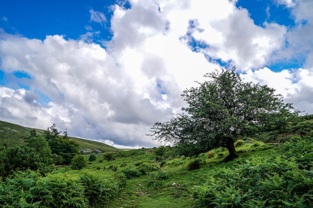 Dartmoor on June 19th 2020