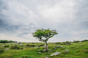 Dartmoor on June 25th 2020