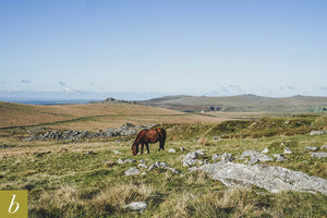 Dartmoor on November 4th 2020