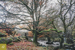 Dartmoor on November 10th 2020