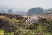 Load image into Gallery viewer, Dartmoor on November 14th 2020