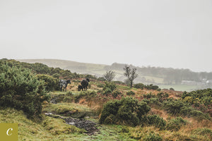 Dartmoor on November 17th 2020