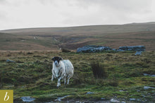 Load image into Gallery viewer, Dartmoor on October 27th 2020